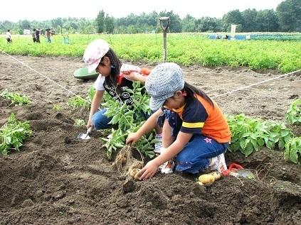 野菜収穫をする女の子,北海道,収穫体験,野菜