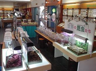 昆虫生態館,昆虫,スポット,北海道