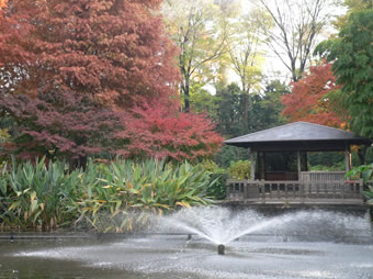 川口市立グリーンセンター,植物園,埼玉,おすすめ