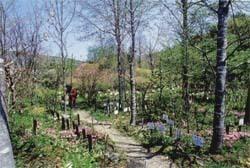 軽井沢町立植物園,長野,植物園,おすすめ