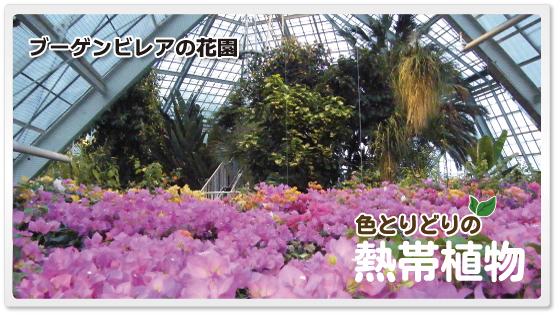 函館市熱帯植物園,おすすめ,北海道,植物園