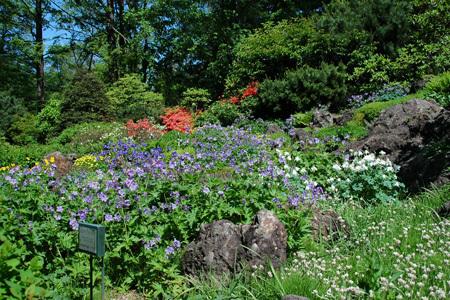 海道大学植物園,おすすめ,北海道,植物園