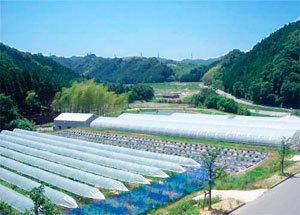 奥貝塚・彩の国 たわわ,夏,野菜,収穫