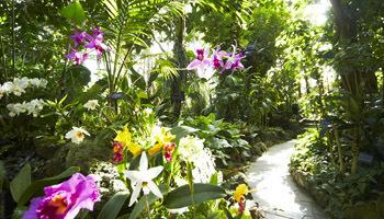 熱帯雨林植物室,花,植物園,大阪