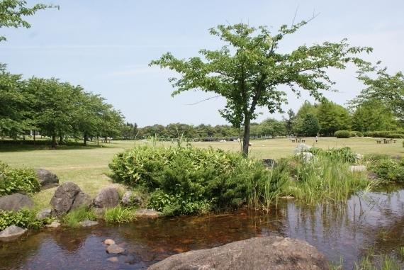 新潟県スポーツ公園,新潟,水遊び,公園