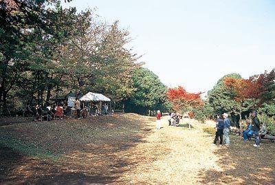 かしの木山自然公園,昆虫採集,夏休み,東京