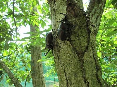 ワクワクながら昆虫ドーム,千葉県,昆虫採集,冒険