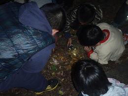 夜の生き物ツアー,千葉県,昆虫採集,冒険