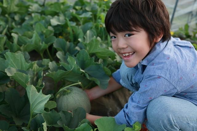 メロン狩りする男の子,夏,味覚狩り,愛知県