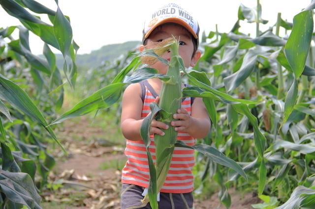 トウモロコシを持つ子ども,夏,味覚狩り,愛知県