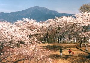 弘法山公園,箱根,ロマンスカー,秦野