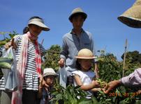 森本農園,子ども,キャンプ,自然体験