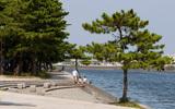 野島公園キャンプ場の画像,神奈川,キャンプ場,
