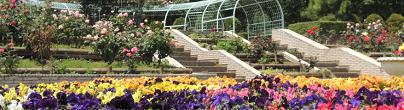 狭山市都市緑化植物園の画像,埼玉 ,バラ園,名所