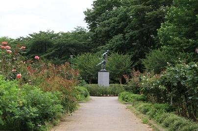 与野公園の画像,埼玉 ,バラ園,名所