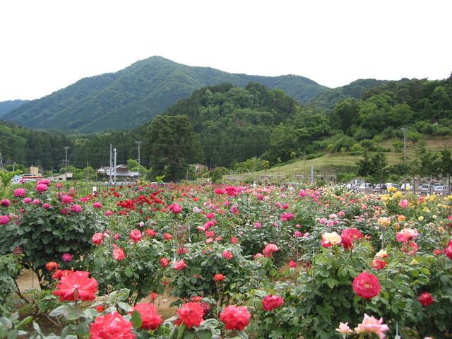 お杉ばら園,まつり,名所,新潟県