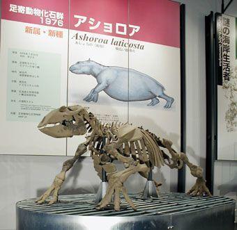 北海道足寄の博物館の画像,北海道,博物館,