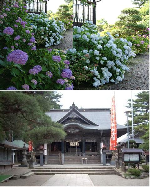 山神社(やまのかみしゃ) ,あじさい,見頃,宮城県