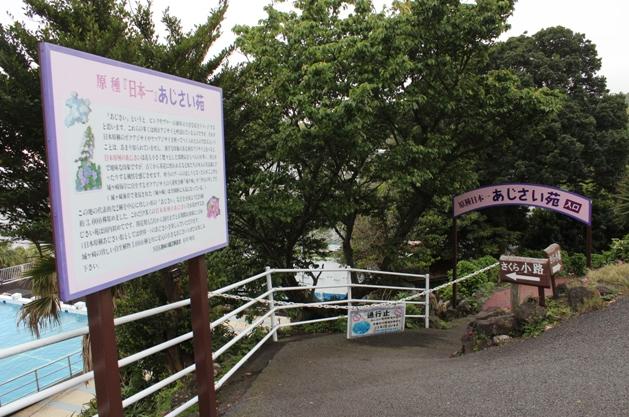 伊豆四季の花公園,静岡,愛知,あじさい