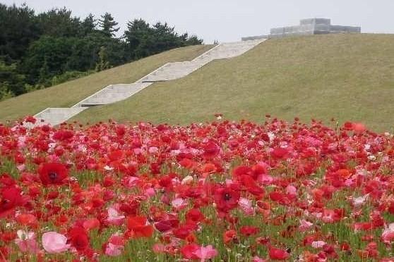 県立紫雲寺記念公園,新潟県,ポピー,いくとぴあ