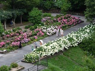 広島市植物公園,あじさい,広島,公園