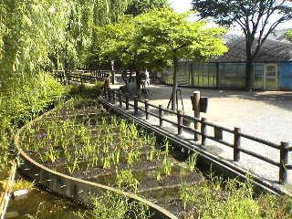 福生市ほたる公園,東京都,蛍,名所