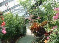 花畑園芸公園温室,福岡県,子どもの写真,植物園