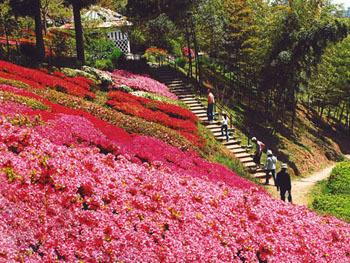 白野江植物公園,福岡県,子どもの写真,植物園