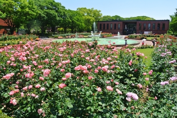 石橋文化センターばら園,福岡県,子どもの写真,植物園