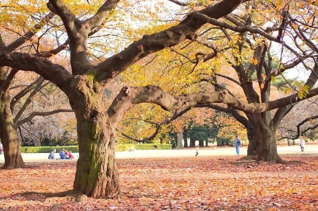 秋の公園,キッズ,デニム,ジャケット