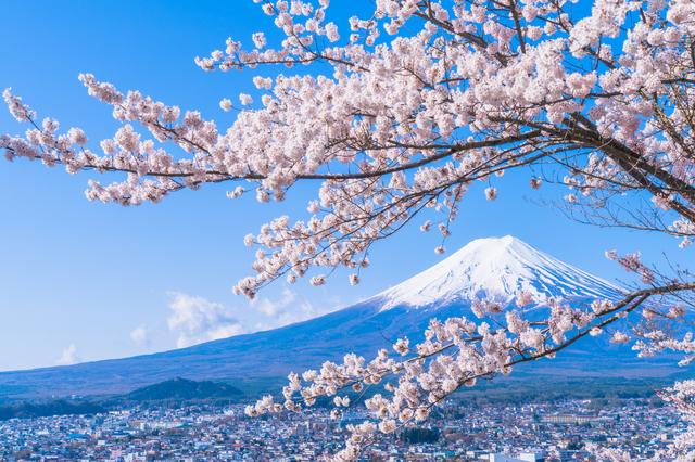 富士山と満開の桜,新富士オートキャンプ場,