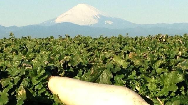 イイジマ農園の野菜摘み,神奈川,いちご,野菜