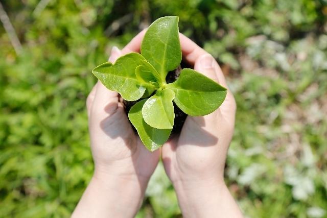 手の中に苗,花,栽培キット,簡単