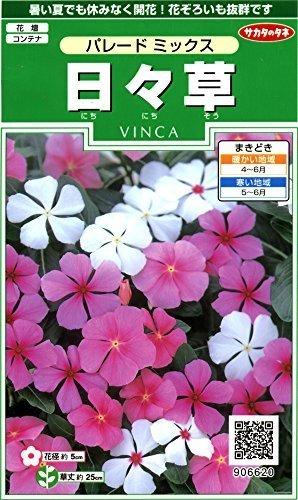 日々草のタネ,花,栽培キット,簡単