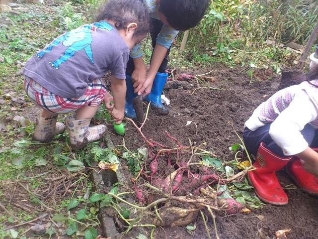 いも掘りする子ども,野菜,栽培,簡単