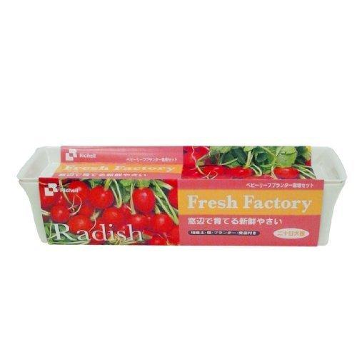 リッチェル ベビーリーフプランター栽培セット 二十日大根,野菜,栽培,簡単