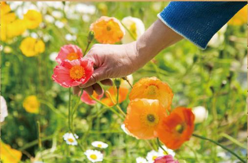 白浜フラワーパークのお花摘み体験,白浜フラワーパーク,キャンプ,千葉