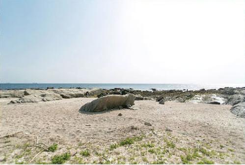 白浜フラワーパークのプライベートビーチ,白浜フラワーパーク,キャンプ,千葉