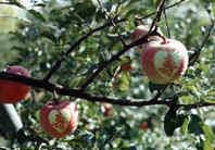 マイネームリンゴ,塚原山フルーツ農場ふかさわ,ふかさわ,バーベキュー