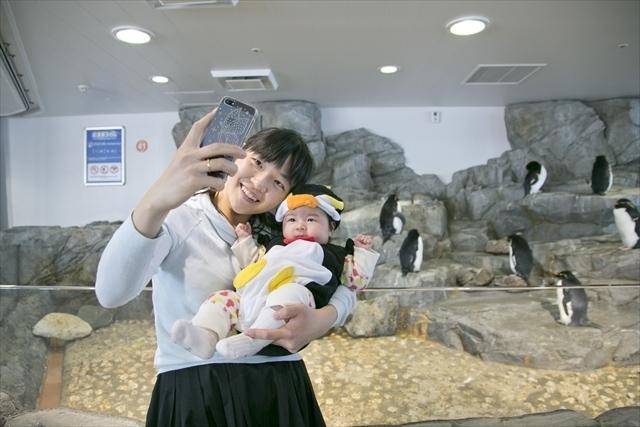 イワトビペンギンと記念撮影,親子,撮影会,イベント