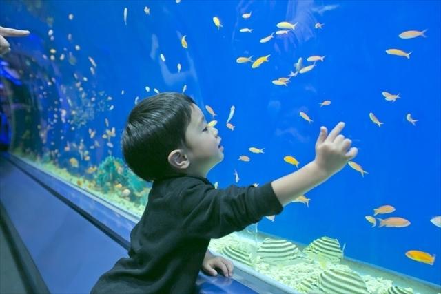 水槽を夢中になってみる子ども,親子,撮影会,イベント