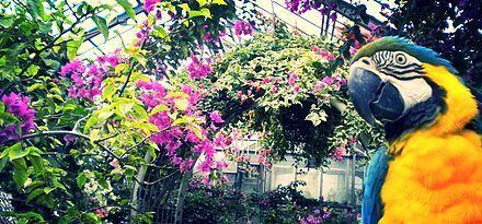 アロハZOOの写真,アロハ,ガーデン,たてやま