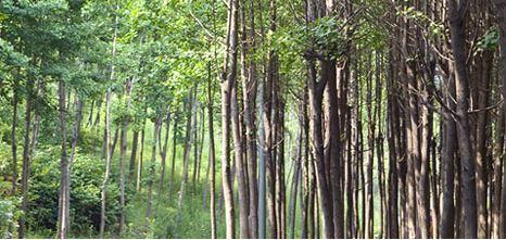 ソウルの森,韓国,公園,子連れ