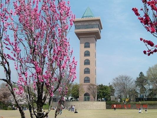 相模原麻溝公園のグリーンタワー,神奈川,相模原麻溝公園,動物