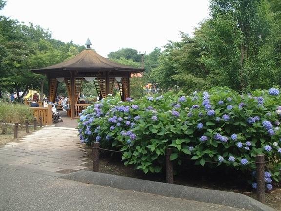 相模原麻溝公園の樹林広場,神奈川,相模原麻溝公園,動物