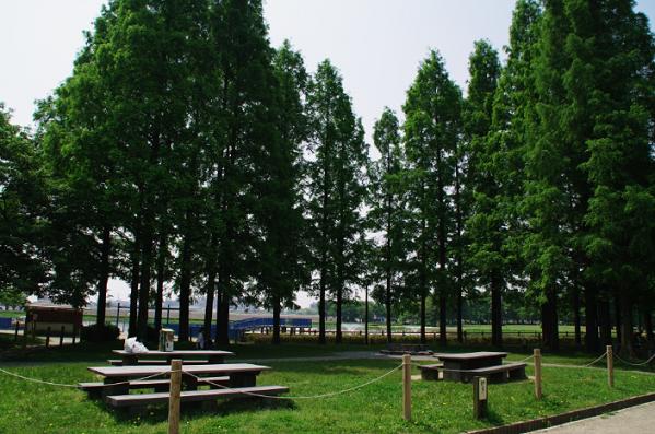 ピクニック広場,庄内緑地グリーンプラザ,名古屋,魅力