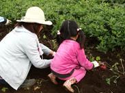 農業体験,佐倉草ぶえの丘,バラ園,おすすめ