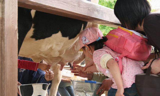 乳しぼり体験,成田ゆめ牧場,動物,イベント