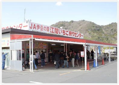 江間いちご狩りセンター,江間いちご狩りセンター,子連れ,静岡