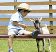 カドリードミニオン ふれあい動物園,熊本,おでかけ,スポット